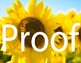 Sunflower Stock Photos and Clip Art