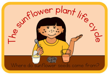 Sunflower life cycle book (simple version)