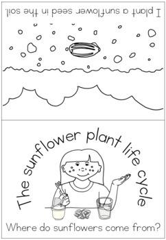 Sunflower life cycle bundle