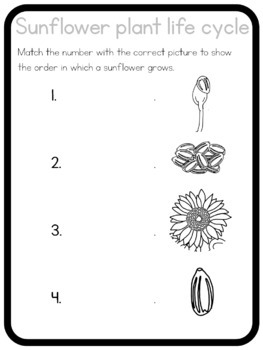 Sunflower life cycle circle time questions