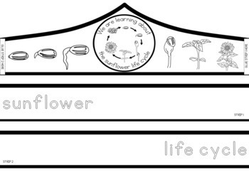 Sunflower life cycle crown