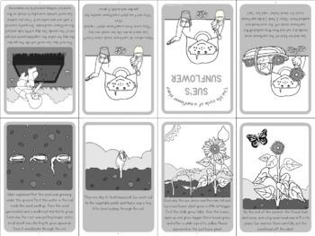 Sunflower life cycle mini book