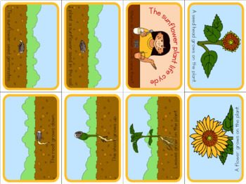 Sunflower life cycle mini book (simplified version)