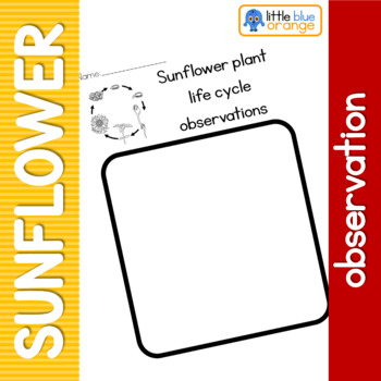 Sunflower life cycle observation sheet