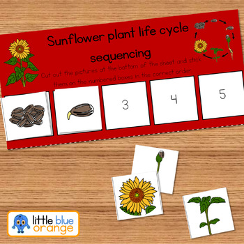 Sunflower life cycle sequencing activity worksheet