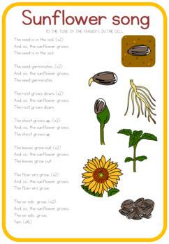 Sunflower life cycle song