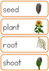 Sunflower life cycle word wall