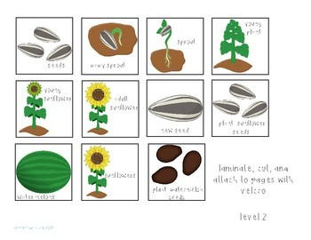 Sunflowers: An Interactive Comprehension Book