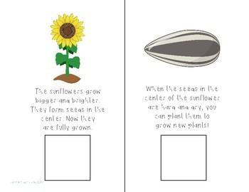 Sunflowers Interactive Comprehension Book