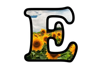 Sunflowers Bulletin Board Letters,  Numbers and Symbols, Fall, Flowers Display