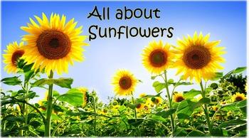 Sunflowers Pack