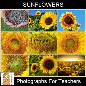 Sunflowers Photograph Pack