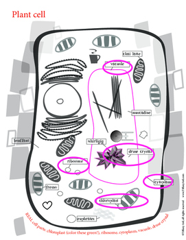 Super SILLY Parts of a Cell