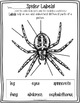 Super Spiders!  A Common Core Science and Writing Unit for