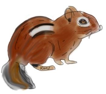 Chipmunk Clipart