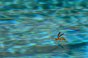 Surface Tension of Water Photograph