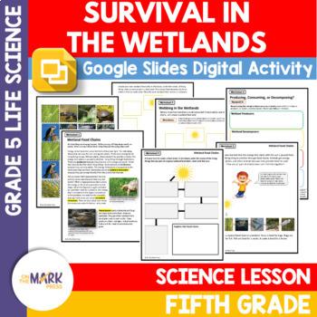 Survival in the Wetlands Lesson Plans Grade 5