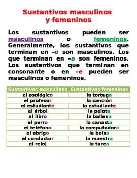 Sustantivos masculinos y femeninos