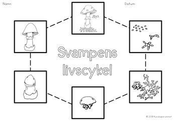 Svampens delar och livscykel