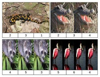 Swamp Animals Clip Task Cards