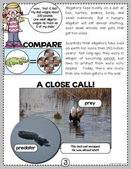 Swamp Chomp!  A Nonfiction SMARTICLE About Alligators  (Grades 1-3)