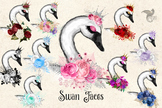 Swan Faces clipart, watercolor swans, Spring mothers day clip art graphics