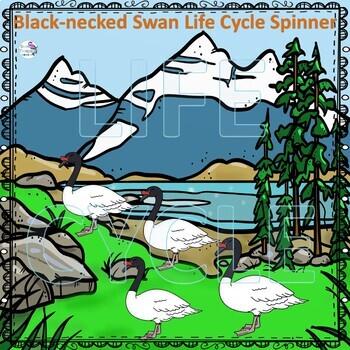 Swans Bundle