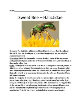 Sweat Bee - informational article lesson review with questions