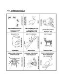 Symbiosis: 9 Square Puzzle Card Sort EASY