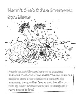 Symbiosis Coloring Sheet: Hermit Crab and Sea Anemone