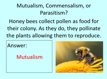 Symbiotic Relationships PowerPoint