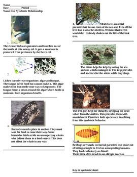 Symbiosis practice sheet
