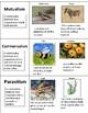 Symbiotic Relationship-Science