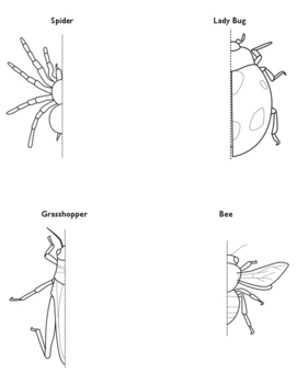 Symmetry Worksheet: Insect & Spider Drawing!