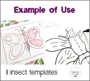 Symmetry in Insects _ Full Version Drawing Worksheets