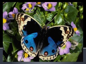 Symmetry in Nature - Butterfly Inspiration