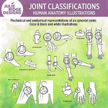 Synovial Joints Human Anatomy Clip Art Illustrations