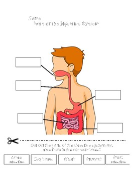 Systems of the Body Activities {Cut & Paste!}