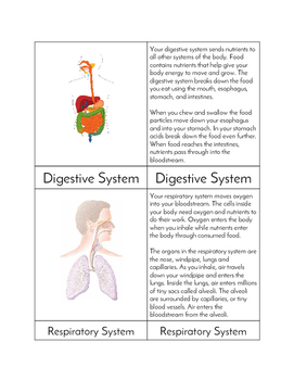 Systems of the Body - Three Part Cards