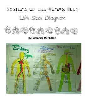 Systems of the Human Body- Life Size Diagram