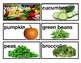 TC Picture Vocabulary cards for word wall Pre K,1st, 2nd,3rd,4th,ELL