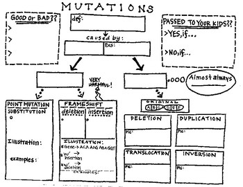 Mutation Concept Map.Teks 6e Genetic Mutations Concept Map By Educationally Essential By