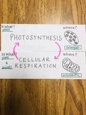 TEKS 9B Photosynthesis and Cellular Respiration Foldable