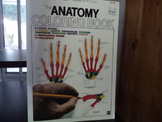 THE ANATOMY COLORING BOOK  ISBN 0 06 453914 8