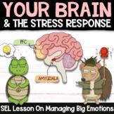 THE BRAIN + STRESS RESPONSE: Social Emotional Learning Str