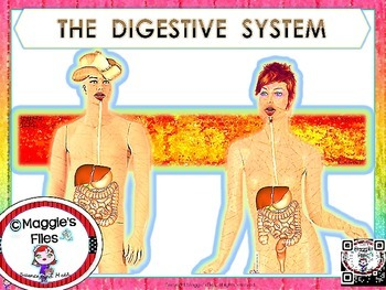 DIGESTIVE SYSTEM POWER POINT AND NOTES