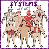THE HUMAN BODY ~ SYSTEMS CLIP ART