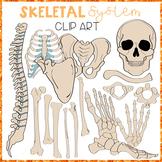THE HUMAN BODY ~ SKELETAL SYSTEM CLIP ART