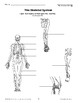 THE HUMAN BODY UNIT 2: THE SKELETAL SYSTEM