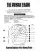 THE HUMAN BRAIN . . . How It Works-28-Pages & 3-DAYS of HANDS-ON ACTIVITIES
